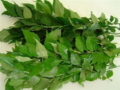 Tajagro Curry Leaves