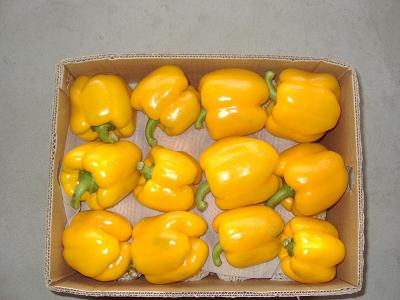 yellow pepper in the Box