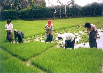 agriculture industry development of country The economic development in india followed socialist specific one and that the country may be able to skip the agricultural and rural development.