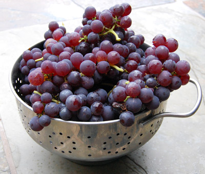Black Grapes Black Grapes Juice,black