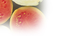 Guava Fruit Facts