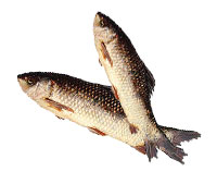 Fresh Water Fish Rohu