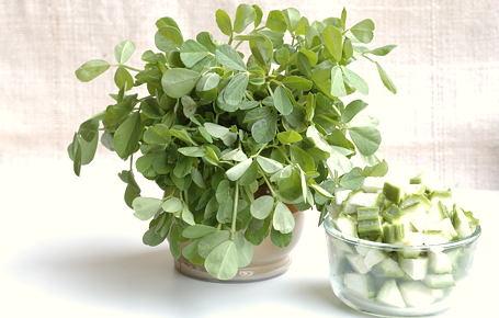 Methi Leaves Fenugreek Leaf Fenugreek Leaf Exporters In